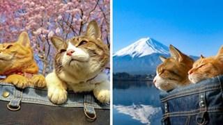 Dân mạng phát hờn với 2 boss mèo được vác đi khắp Nhật Bản: Cảnh đẹp như mơ mà chỉ lo ngáp với ngủ