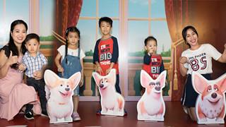 Gia đình sao Việt hào hứng với Corgi: Những chú chó hoàng gia