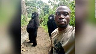 Ham chụp tự sướng với các chú kiểm lâm, 2 con khỉ đột bỗng chốc nổi như cồn khắp thế giới