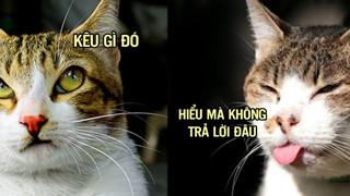 Thực ra mèo biết tên của chúng là gì, chúng chỉ giả vờ không nghe bạn gọi thôi