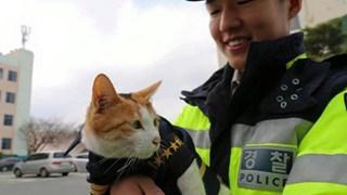 Mèo mẹ vác bụng bầu cho các anh cảnh sát đỡ đẻ dùm, sau đó chính thức trở thành cảnh sát mèo cực dễ thương !