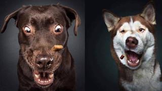 """1001 biểu cảm của các """"soái cún"""" khi bắt thức ăn khiến """"con sen"""" được phen cười nắc nẻ"""
