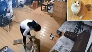 Nhờ bạn cùng phòng chăm giúp mèo cưng khi đi du lịch, cô gái xem CCTV mới phát hiện nó bị hành dạ dã man