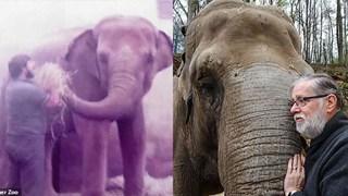 Người quản tượng xúc động khi con voi 52 tuổi vẫn nhận ra ông sau 32 năm xa cách