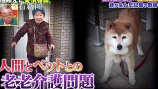 Cụ bà và chú chó cưng cùng bị mất trí nhớ nhưng vẫn nhận ra nhau sau thời gian dài xa cách