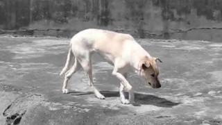 Du khách tức giận khi chỉ thấy độc một con chó nhà trong chuồng sói tại sở thú Trung Quốc