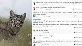 Tại sao Úc phải tiêu diệt 2 triệu con mèo hoang?