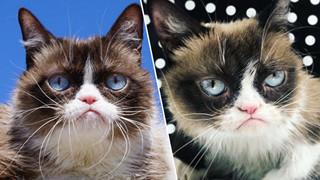 Fan toàn thế giới chia buồn trước tin Grumpy Cat đã qua đời khi tròn 7 tuổi