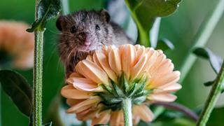 Sau khi bị mèo rượt mém chết, chú chuột con được anh nhiếp ảnh tốt  bụng chụp bộ ảnh đẹp như thiên thần