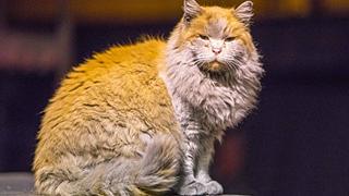 Mèo hoang thành 'ngôi sao' hút khách tại ga xe lửa Mỹ
