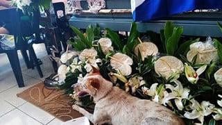 Nằm cạnh linh cữu của thầy giáo suốt nhiều ngày, chú chó khiến cả nhà tang lễ phải rơi nước mắt