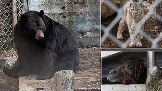 Giải cứu thú quý hiếm trong sở thú tồi tàn ven đường: hơn 100 cá thể bị bạc đãi, bỏ đói... khiến nhiều người phẫn nộ
