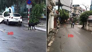 Cả tuyến phố bị phong tỏa vì 3 con chó dữ lao ra khỏi xe ô tô, người dân tá hỏa không dám đi lại