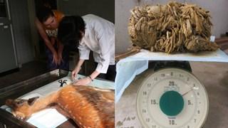 Chú nai ăn xin nổi tiếng ở Nhật Bản chết vì nuốt hơn 3kg túi ni lông vào bụng