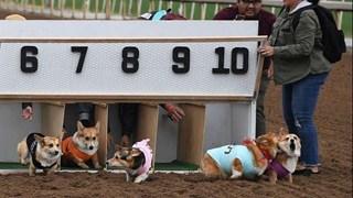 Cuộc đua dễ thương của dàn thú cưng ở California