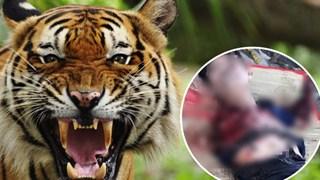 Nam thanh niên bị hổ cắn đứt lìa 2 tay trong khu du lịch sinh thái ở Bình Dương