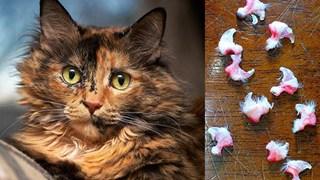 Dự luật biến New York thành tiểu bang đầu tiên cấm rút móng mèo: Vậy ra bấy lâu nay con người đã đối xử với chúng tàn bạo quá