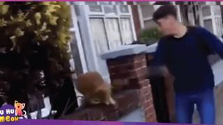 Một học sinh 15 tuổi bị cảnh sát bắt giữ vì tội đấm vào mặt mèo rồi cười khoái chí