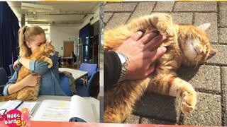Không ăn ngủ và phá rối như con Bubba, chú mèo này tới trường để giúp xoa dịu tinh thần, xả stress cho sinh viên