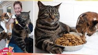Bị bỏ đói suốt 4 tuần, 2 chú mèo đã may mắn sống sót nhờ lượng MỠ dư trong người