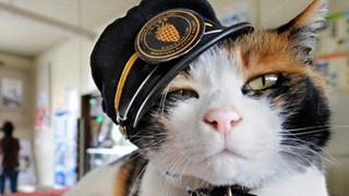 Tama số đỏ: từ việc lang thang trên đường phố, chú mèo này đã trở thành biểu tượng của Nhật Bản