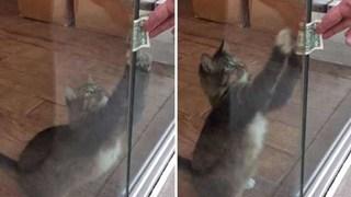 Nhận nuôi chú mèo hoang, người đàn ông liên tiếp thấy tiền trước cửa nhà, tự dưng muốn nuôi mèo quá!