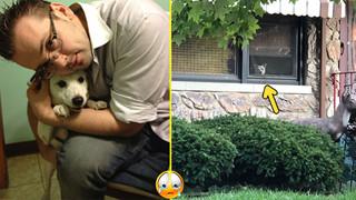 Câu chuyện cảm động về chú chó đứng chờ chủ ở cửa suốt 11 năm ròng, cho đến một ngày nó bỏ cuộc