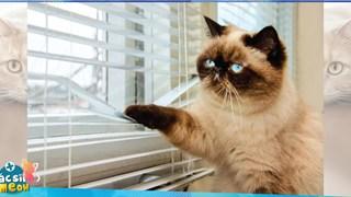 Lũ mèo sẽ cảm thấy bị bỏ rơi nếu bạn ra khỏi nhà mà không nói gì với chúng