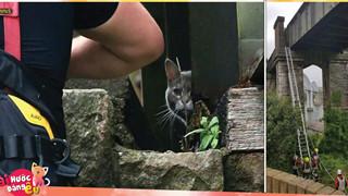 Lính cứu hỏa dành 5 tiếng và 174 tr để cứu 1 con mèo mắc kẹt trên cầu, nhưng nó lại từ chối và ở trển