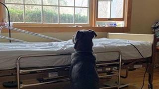Xót xa hình ảnh chú chó ngồi bên giường bệnh, mắt rầu rĩ nhìn ra cửa sổ chờ người chủ quá cố