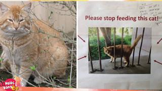 Con mèo này mập địt tới nỗi người ta phải dán áp phích cầu xin mọi người đừng cho nó ăn nữa