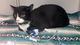 Suýt chết vì bị chủ nhân quay trong máy giặt 35 phút, con mèo số nhọ được cả MXH mệnh danh là 'sạch nhất thế giới'