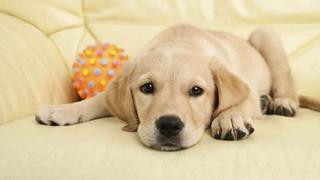 Bạn có biết: Nỗi đau mất đi thú cưng to lớn chẳng kém gì nỗi đau mất đi người thân