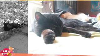 Chú mèo đột nhiên xuất hiện sau khi người chủ khóc lóc làm đám tang đã đời cho nó