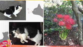 Nơi chú mèo này chết mọc lên khóm hoa bỉ ngạn – loài hoa của sự bi thương