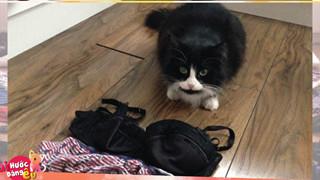 Thay vì bắt chuột, chú mèo này lại có cả bộ sưu tập đồ lót do chính mình tự trộm cắp đem về