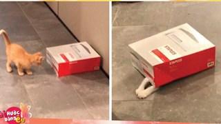 1 công ty thuê 2 chú mèo về làm việc (bao ăn ở) để thúc đẩy tinh thần làm việc của nhân viên