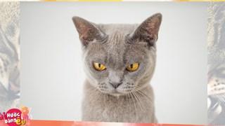 Nghiên cứu chỉ ra những con mèo láo toét là do bắt chước tính cách và lối sống của người chủ