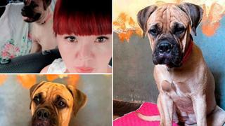 Bị chủ vô tâm bỏ rơi, chú chó vẫn trung thành vượt 200km tìm đường trở về trong nước mắt