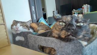 Chuyện lạ: Công ty công nghệ Nhật Bản trích hẳn một khoản bồi dưỡng tiền nuôi mèo cho nhân viên