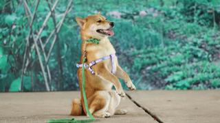 'Cậu Vàng' của Nam Cao: Phim Việt đầu tiên vai chính là một chú chó