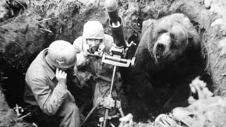 Có 1 chú gấu siêu to chuyên tải đạn là Hạ Sĩ của quân đội Ba Lan từng tham gia chiến tranh thế giới thứ 2