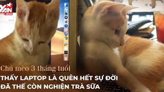 Kỳ lạ chú mèo 3 tháng tuổi đam mê bất tận với laptop, trà sữa