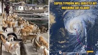 Cơn bão tồi tệ nhất Nhật Bản sẽ tấn công vào những hòn đảo Mèo nổi tiếng ở Nhật Bản