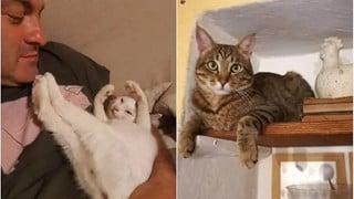 """Được 2 """"boss"""" mèo đánh thức, cặp vợ chồng may mắn thoát khỏi tai họa trời giáng"""