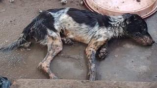Cô gái trẻ đẹp núp bóng cứu hộ động vật để kêu gọi quyên góp rồi bỏ mặc nhiều chú chó chết trong căn nhà đầy chất thải