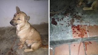 Mâu thuẫn vì nghi chó cắn vịt, hàng xóm đánh bẫy rồi cắt lưỡi chú chó nhỏ khiến dân mạng phẫn nộ