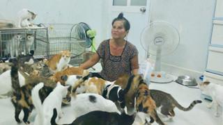 """""""Bà mẹ"""" của 400 chú mèo bị tai nạn cũng không dám đi viện vì muốn để dành tiền mua thức ăn cho """"các con"""", bật khóc tức tưởi khi người khác gièm pha là... đi bắt trộm mèo"""