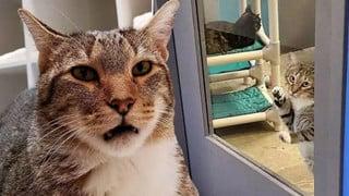 Chú mèo bị biệt giam vì hở ra là dắt anh em động vật cơ nhỡ trốn trại