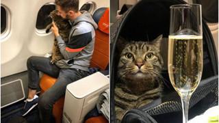 """Lén lút mang """"hoàng thượng mèo"""" thừa cân lên máy bay, chàng trai nhận án phạt cực nặng từ hãng hàng không"""